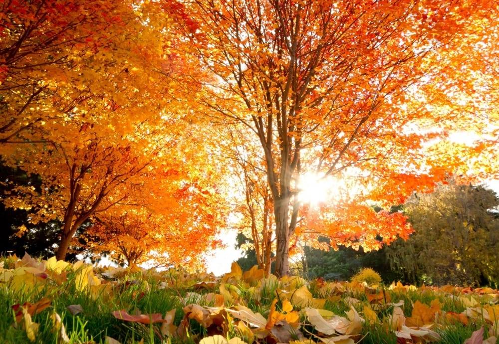 Йдемо далі, в нову осінь... 19 фото осінніх барв !