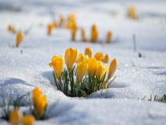15 фотографій, в яких пробивається весна (1)