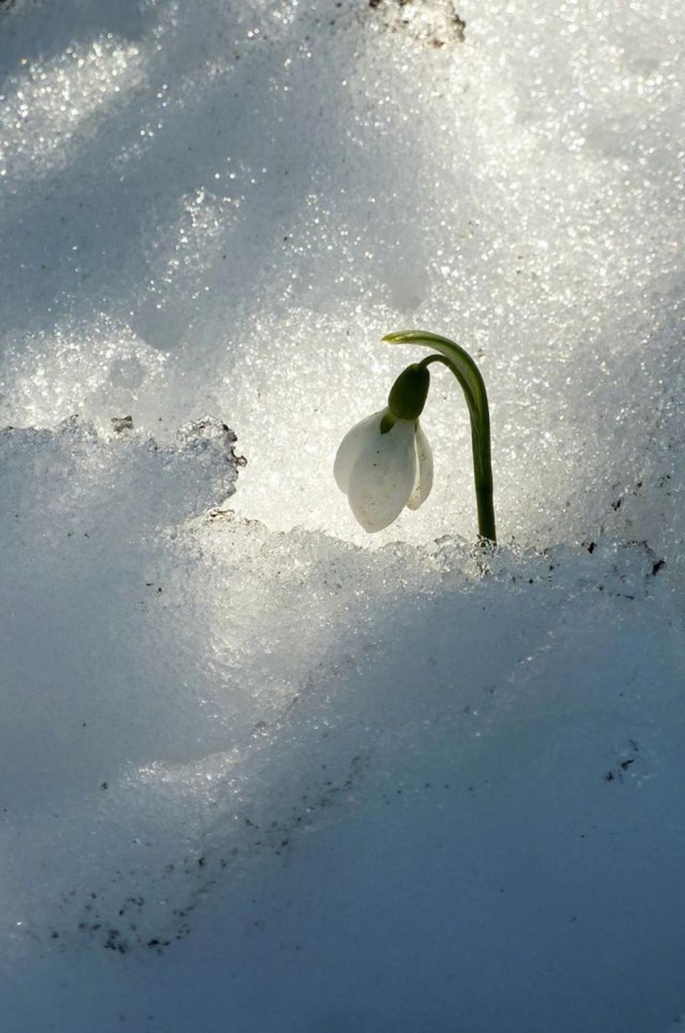 15 фотографій, в яких пробивається весна (10)