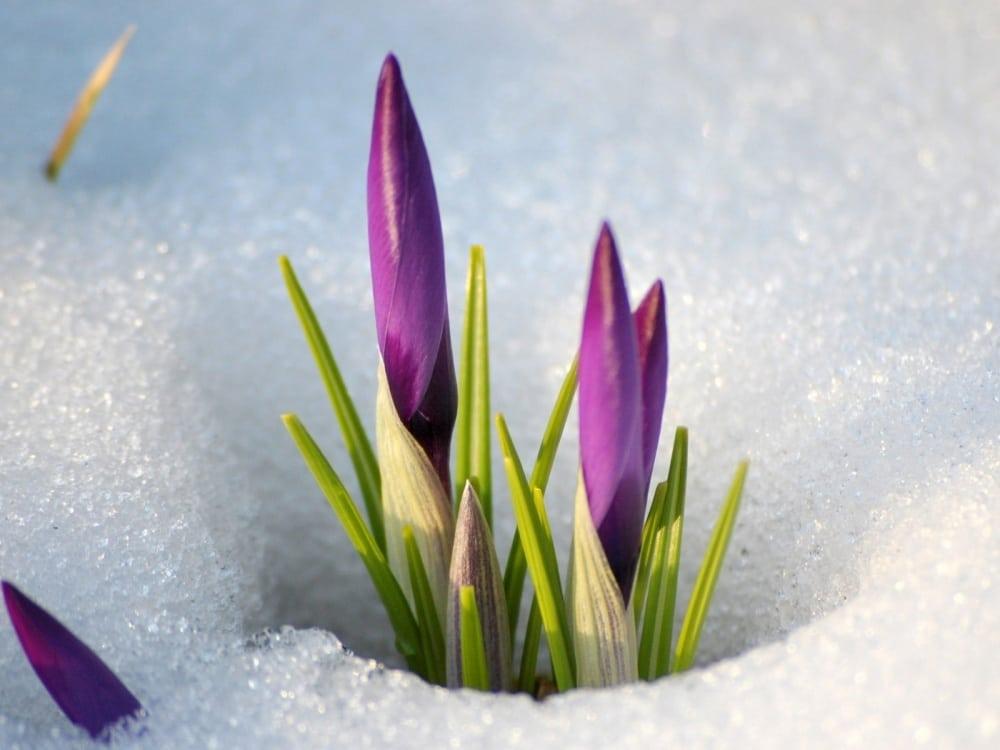 15 фотографій, в яких пробивається весна (11)