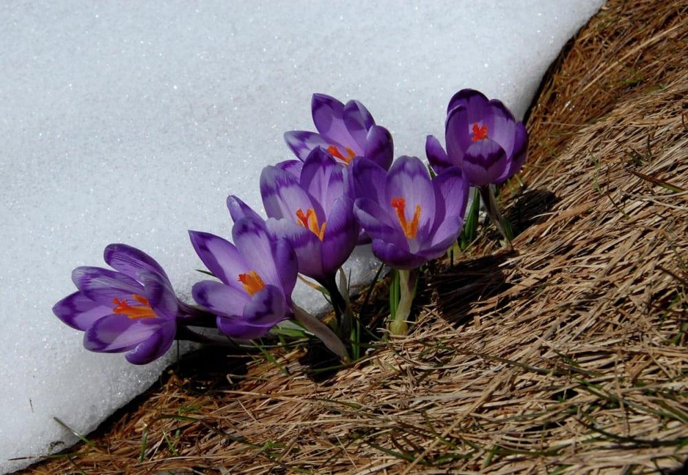 15 фотографій, в яких пробивається весна (2)