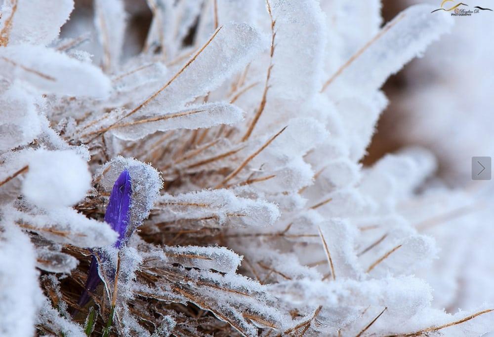 15 фотографій, в яких пробивається весна (3)