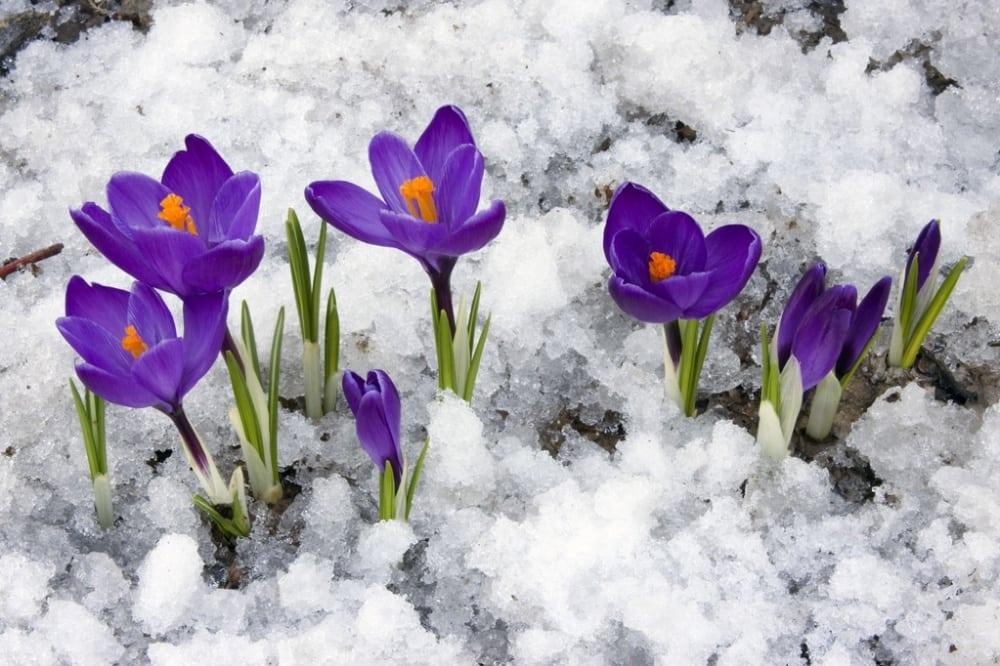 15 фотографій, в яких пробивається весна (4)