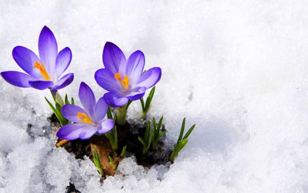 15 фотографій, в яких пробивається весна (8)