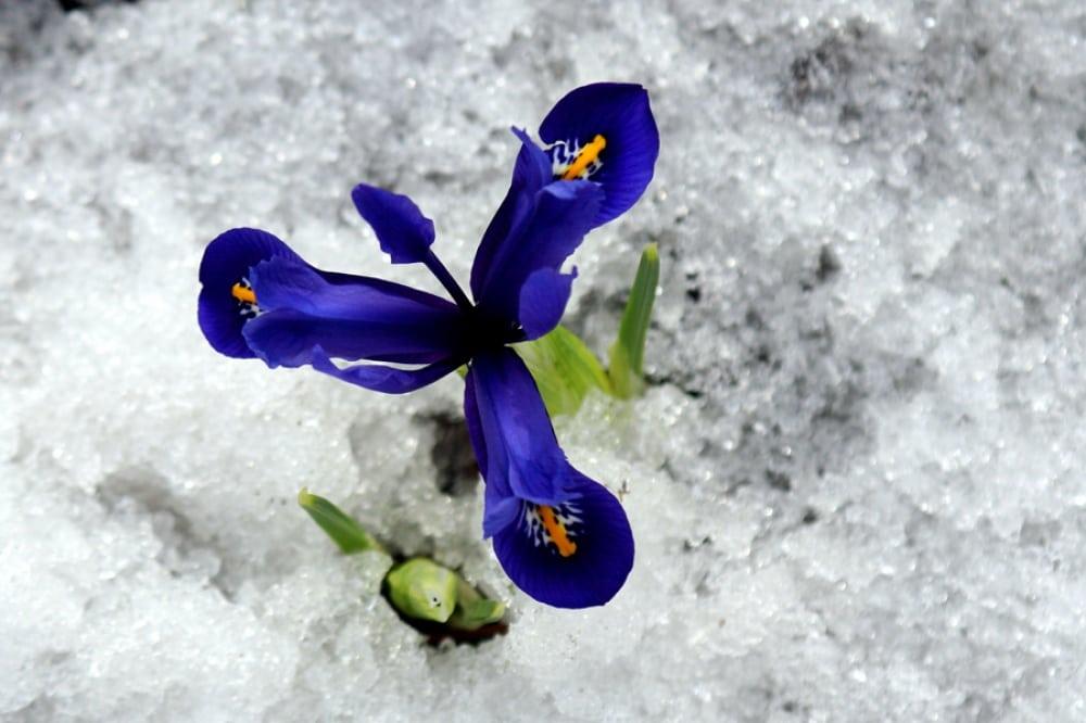 15 фотографій, в яких пробивається весна (9)