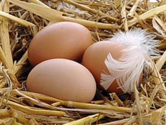 Органічні яйця і фермерські кури: в чому перевага?