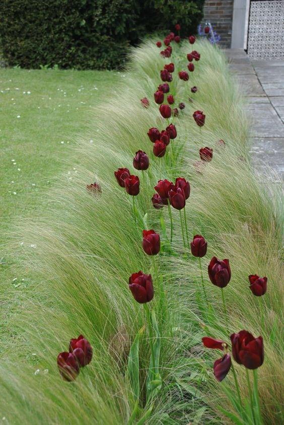 Квітники під парканом та навколо дому 25 оригінальних ідей (16)