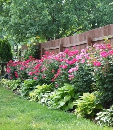 Квітники під парканом та навколо дому 25 оригінальних ідей (17)