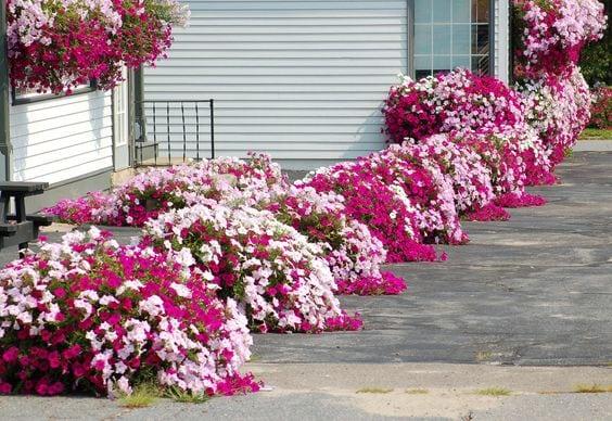 Квітники під парканом та навколо дому 25 оригінальних ідей (22)