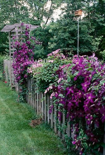 Квітники під парканом та навколо дому 25 оригінальних ідей (4)