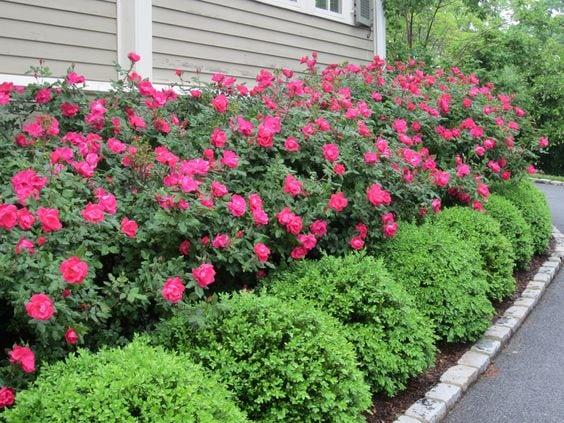 Квітники під парканом та навколо дому 25 оригінальних ідей (6)
