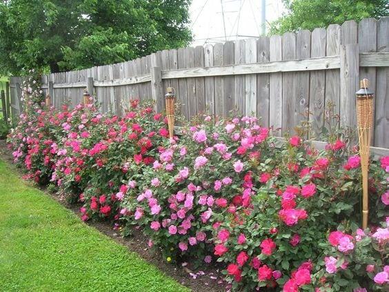 Квітники під парканом та навколо дому 25 оригінальних ідей (7)