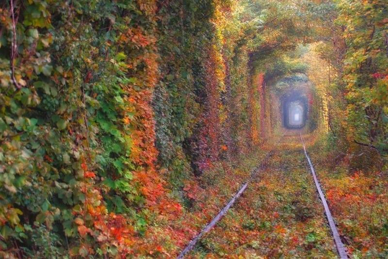Тунель кохання у Клевані: лісова дорога у казку